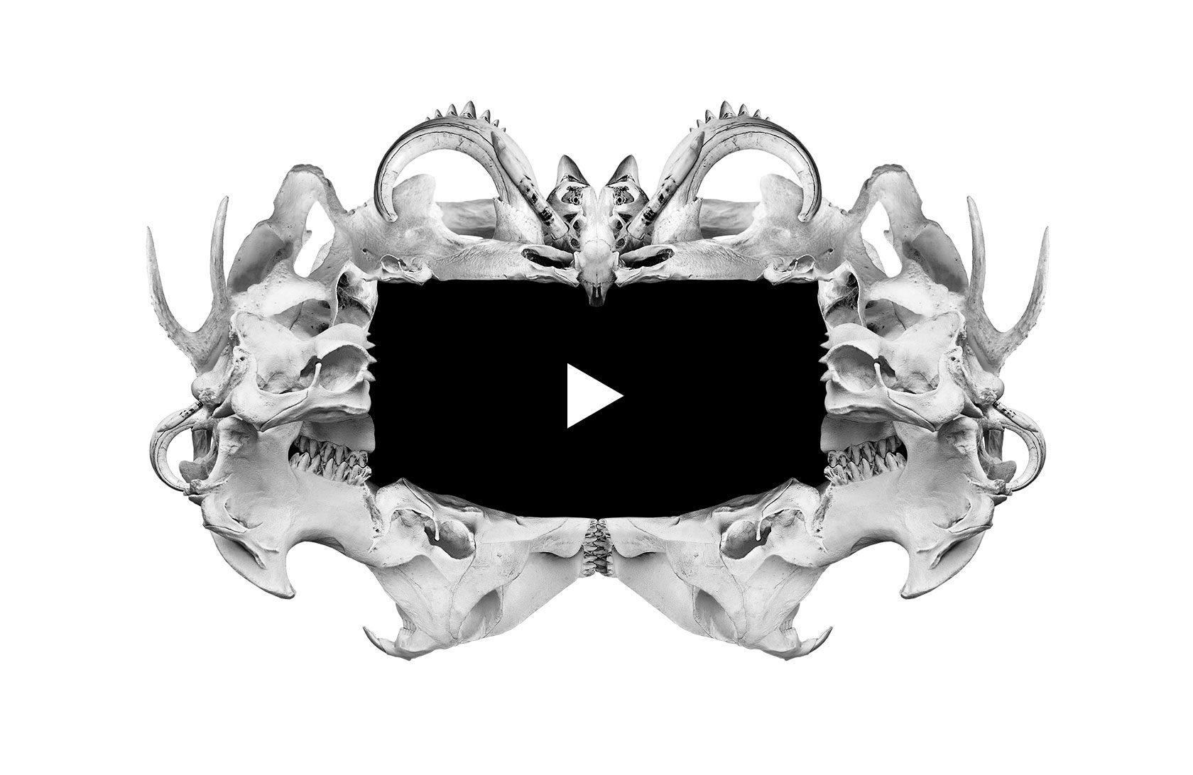 The Visual Medium Media Player Bone Design by Furia