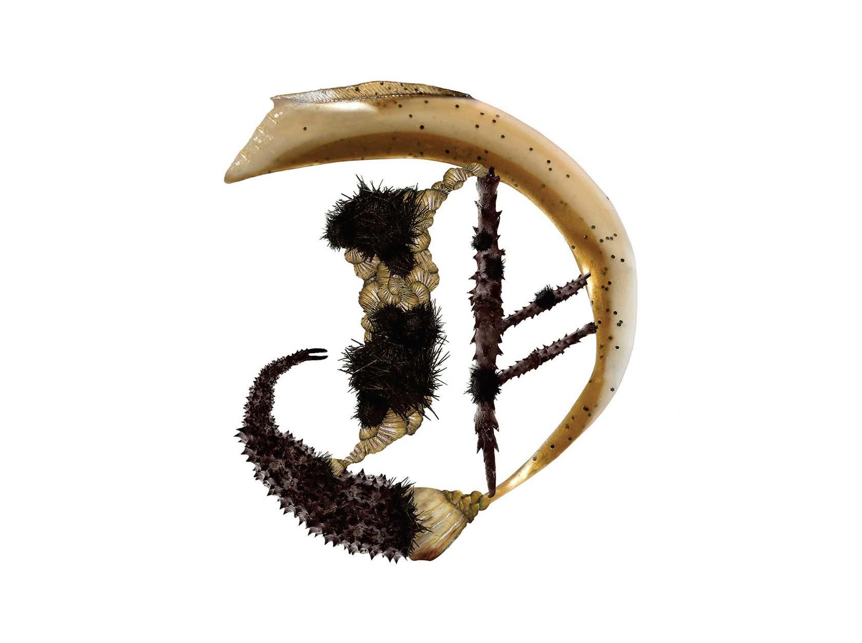 Bird Headed Monster Letter D3 Design by Furia