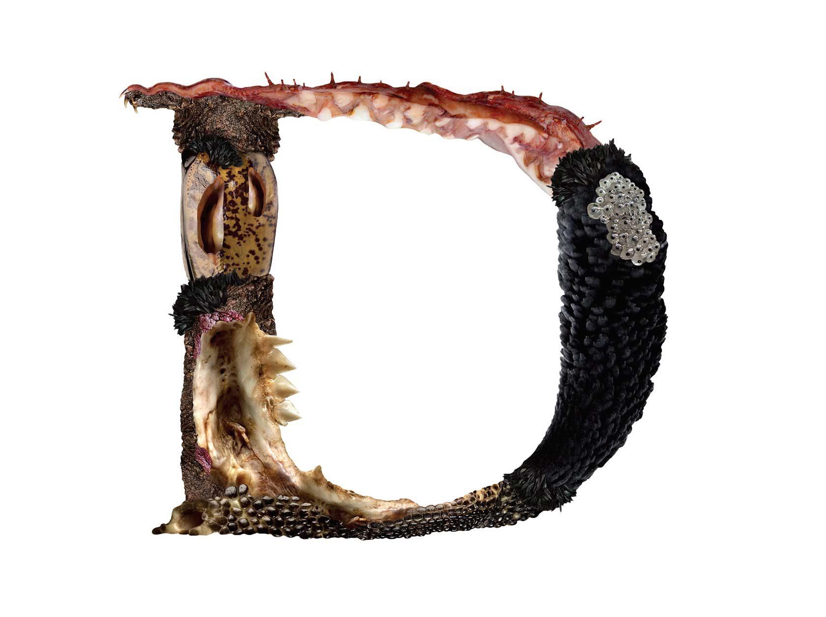 Bird Headed Monster Letter D2 Design by Furia