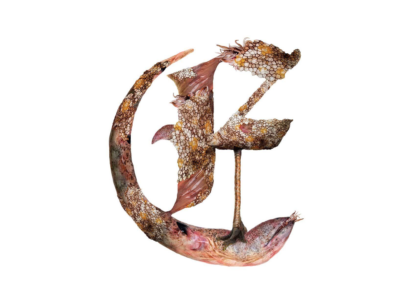 Bird Headed Monster Letter E2 Design by Furia