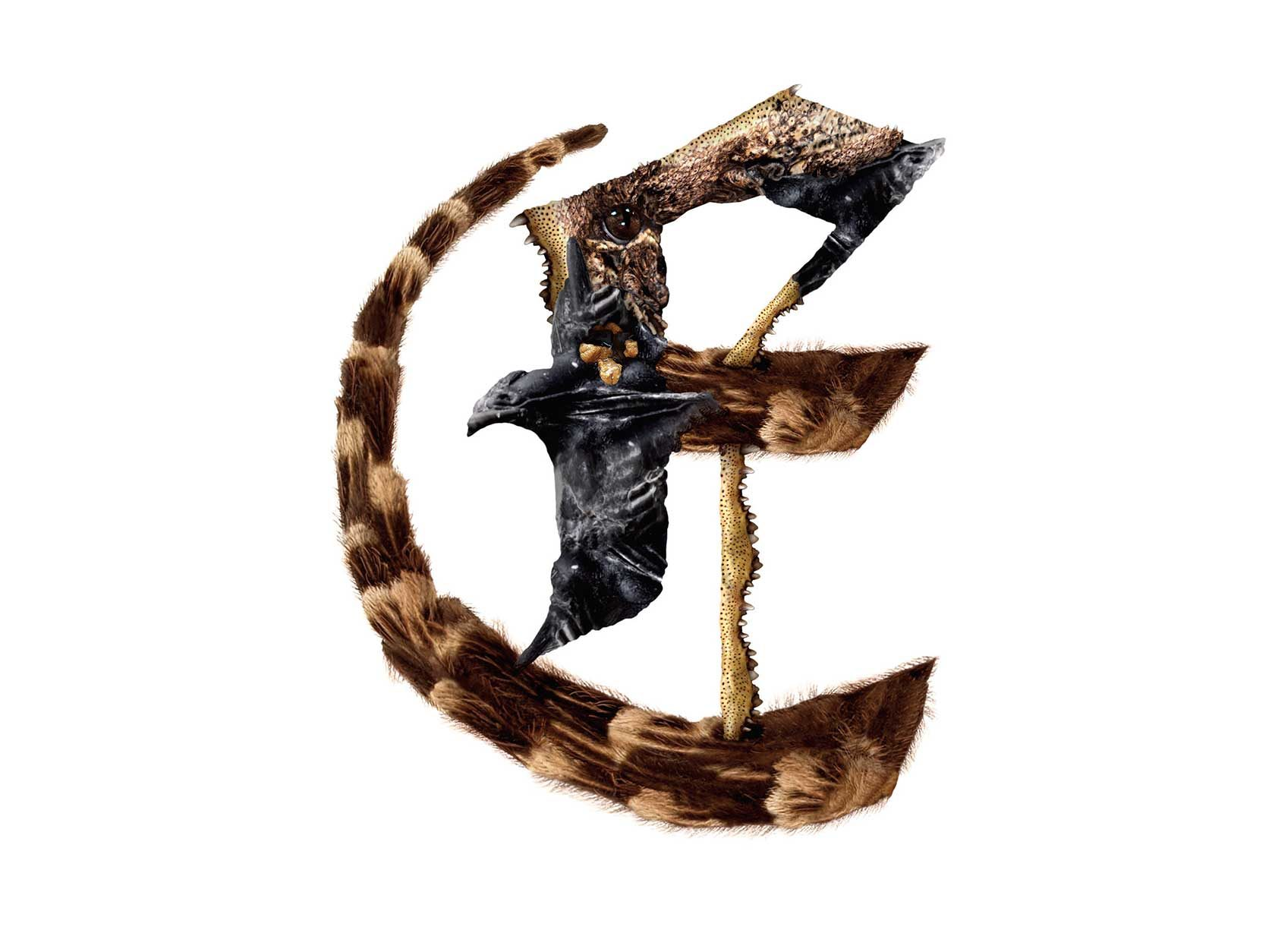 Bird Headed Monster Letter E Design by Furia