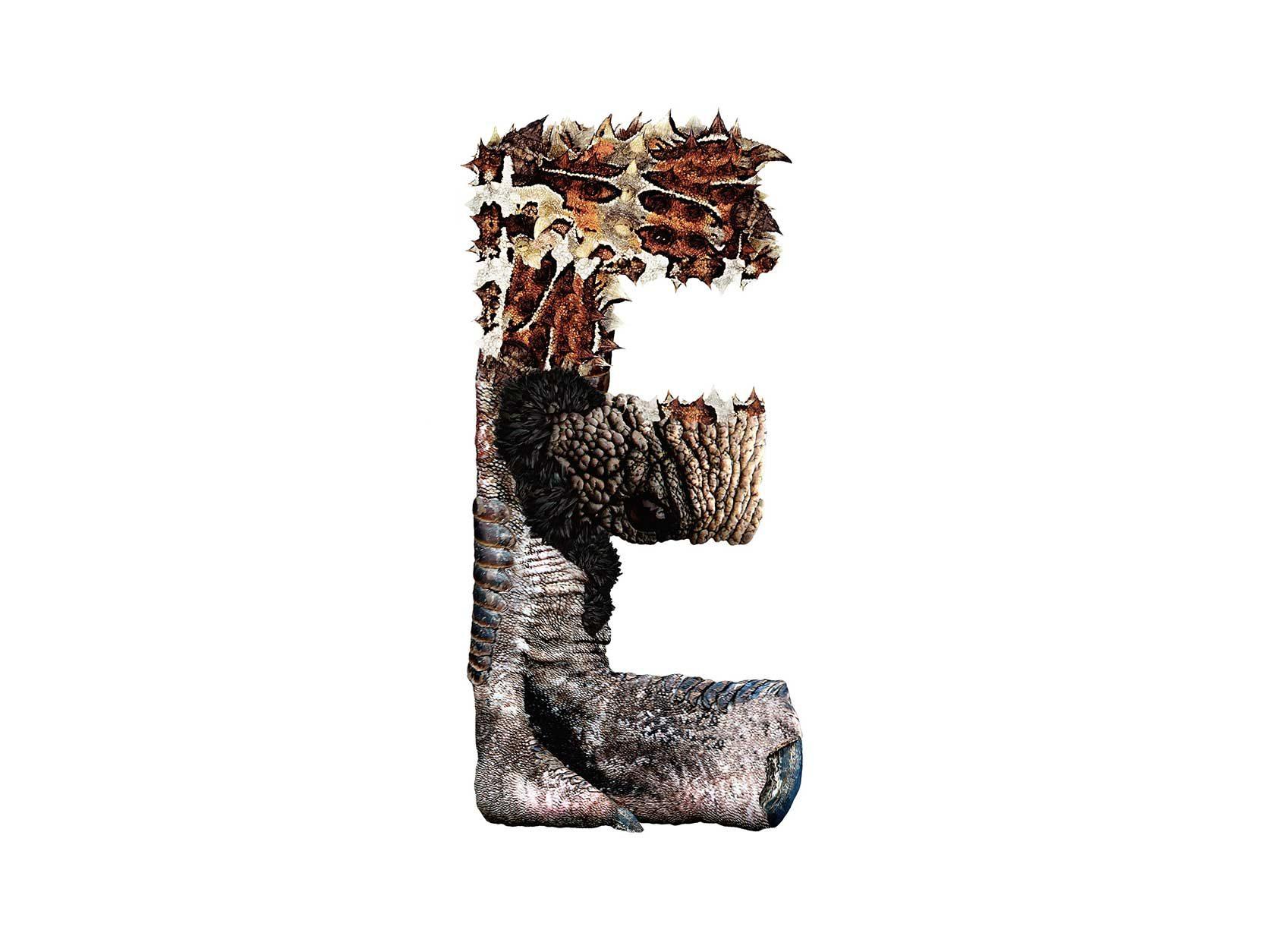 Bird Headed Monster Letter E3 Design by Furia