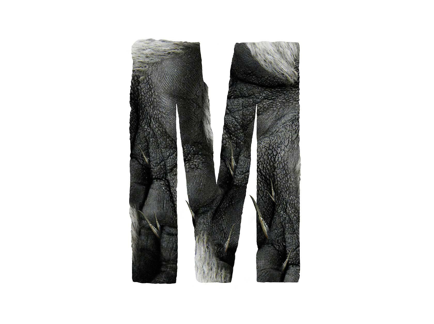 Bird Headed Monster Letter M Design by Furia