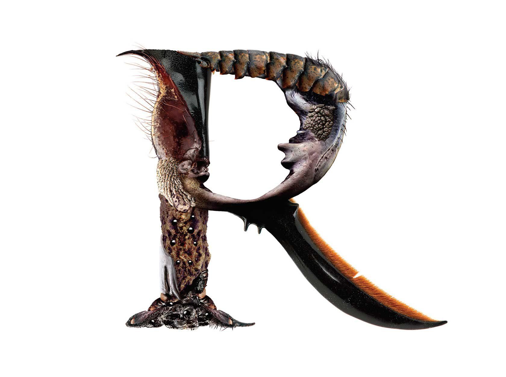 Bird Headed Monster Letter R Design by Furia